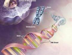 ¿De qué están hechos los genes?