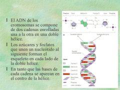 Explique las principales estructuras espaciales que guarda el ADN: