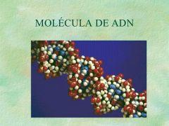 ...llamadas histonas, están envueltas por la molécula del ADN. Estructura cuaternaria: El enrrollamiento de los nucleosomas  recibe el nombre de solenoide. Dichos solenoide se enrrollan formando la cromatina del núcleo interfásico de la célul...