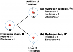 atoms that gain or lose electrons 