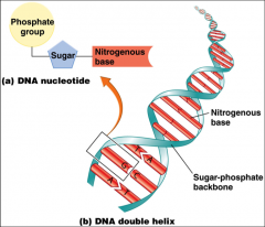 regions of DNA that code for proteins that perform certain functions
