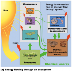 Sun energy flows in one direction through ecosystems