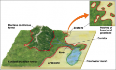 the study of how landscape structure affects the abundance, distribution, and interaction of organisms