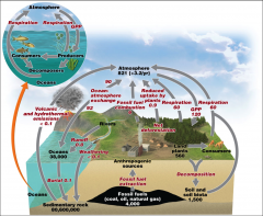 describes carbon's route in the environment