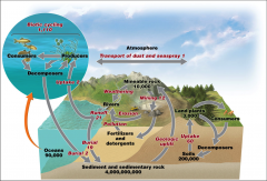 describes the routes that phosphorus takes through the environment