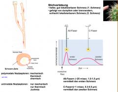 Ad-Faser: leicht myelinisiert, sehr schnell C-Faser: nicht myelinisiert, kleiner Durchmesser, langsamer 1m/s sind üblicherweise nicht sehr leicht zu aktivieren, braucht einen Sensitivisierungsfaktor.
