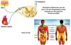 Damit wir nicht immer den Herzschlag spüren oder den Darm etc. diese Organe geben ihre Informationen konvergent weiter, unser Gehirn interpretiert dann, dass uns bestimmte Hautareale schmerzen anstatt von den Organen selbst, (Herz: Brustbereich, ...
