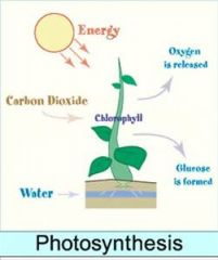 Photosynthesis takes place in the leaves of the plant.