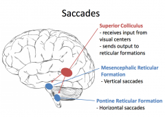 The superior colliculus (Part of basal ganglia) receives input from the visual centers and sends it to the reticular formations in the brainstem      Mesencephalic reticular formation is for vertical saccades      Pontine Reticular Foc...
