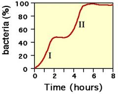 1. גדילה אקספוננציאלית החיידקים משתמשים בגלוקוז. 1א. שלב בין 1 ל-2 זה lag משעתקים את הגנים לללקטוז.  2. שימוש בלקטוז גדילה אקספוננציאלית.