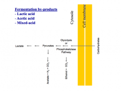 By-products: Lactic acid, acetic acid and mixed acid (Esp. Enterobacteriaceae)
