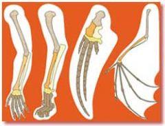 Merkmale (Anatomische Strukturen, Verhaltensmuster, DNA- Sequenzen...), die Arten von einem gemeinsamen Vorfahren geerbt haben.