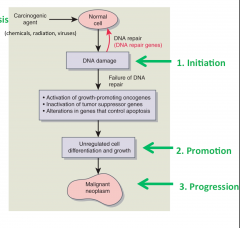 initiation, promotion, and progression (Fig. 8.14). Initiation is the first step and describes the exposure of cells to a carcinogenic agent that causes them to be vulnerable to can- cer transformation. 2 The carcinogenic agents can be chemical, ...