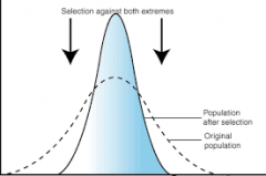 Pathway of natural selection where intermediate phenotypes are selected over phenotypes at both extremes.