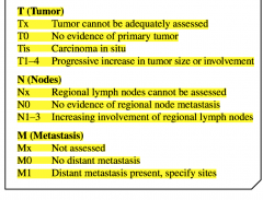 -T stands for the size and local spread of the primary tumor.  - N refers to the involvement of the regional lymph nodes.  -M describes the extent of the metastatic involvement.