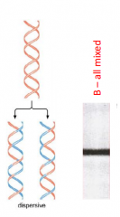 We expect them to be all mixed. Each molecule will have amounts of heavy DNA and light DNA on each strand.