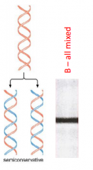The strands separate and we build a new complementary strand with the light DNA. They will be all mixed because one strand will be heavy and the other strand will be light. We get the same result in Dispersive but by a different mode.