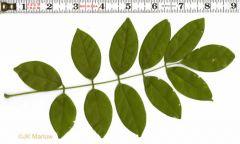 Describe that leaf!