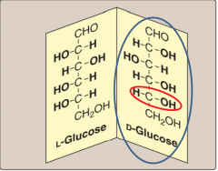 Enantiomers are mirror images of each other • D-forms of sugars are the predominant form in humans