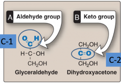 Aldoses have an aldehyde group on carbon 1, whereas ketoses have a keto group on carbon 2 Both are reducing sugars, aldoses react faster and ketoses slower.