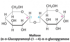 Maltose (present in malt) = 2 glucose units • The two glucose units are linked by an α1→4 glycosidic linkage. • Maltose is a reducing sugar • Maltose is formed as one of the products of digestion of dietary starch by amylase • Maltoseiscleavedtoglucos