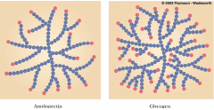 • Amylopectin (branched polymer of glucose) has fewer number of branches compared to glycogen