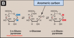 • Monosaccharides with 5 or more C atoms rarely exist in the acyclic form. They are predominantly present in the cyclic form in solution. • As a result of cyclization, two anomeric forms can exist (α and β forms). The two forms are interconvertible and t