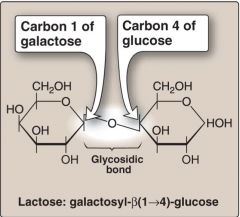 • Made up of two monosaccharides linked by a glycosidic linkage • Lactose (milk sugar)= Glucose + Galactose linked by a β1→4 glycosidic linkage • Lactose is a reducing sugar • Dietary lactose is cleaved to the component monosaccharides by intestinal la