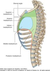 The inferior mediastinum is located below the sternal angle/T4. It's divided into three subdivisions, each containing anatomical structures.    The anterior inferior mediastinum contains the thymus, lymph nodes and branches of the internal thoraci...