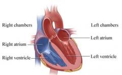 RIGHT: Right atrium, left ventricle. LEFT: Left atrium, left ventricle.   (Written in order of blood flow)
