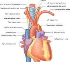 Ligamentum arteriosum (white tube at top of heart on diagram) - remnant of the ductus arteriosus (connected the pulmonary artery to the aorta, as blood does not need to enter the lungs in foetuses - oxygen is obtained through the placenta).   Fora...