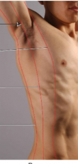 Name the: A-Lateral Line B-Middle line C-Medial line