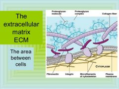 The meshwork surrounding animal cells; consists of glycoproteins and polysaccharides synthesized and secreted by cells.