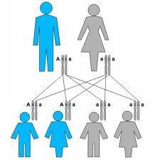 Método mediante el cual se obtiene la frecuencia de un suceso determinado mediante la realización de un experimento aleatorio, del que se conocen todos los resultados posibles, bajo condiciones suficientemente estables.