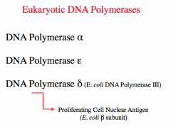 Eukaryotic DNA Polymreases