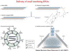 Delivery of siRNAs