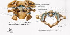 The deepest ligament