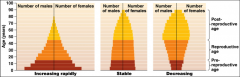 Age structure: describes relative numbers of individuals in each age class Shown by age structure diagrams (population pyramids) Wide base: has many young that haven't reproduced yet Population will soon grow rapidly Even age distribution: ...