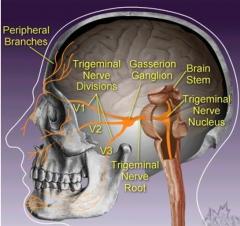 Trigeminus-Nerv