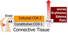 Inflammation stimulates AA release, COX 1 converts AA into PGE2 and PGE2 will cause symptoms.  With inflammation, COX2 expression will be induced and COX2 derived PGE2 will amplify symptoms