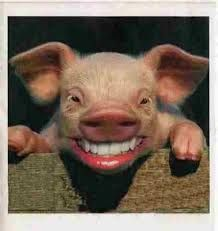 chancho (cerdo)