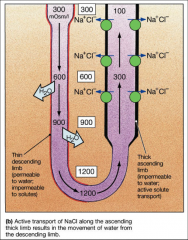 What ion transporters does this show?