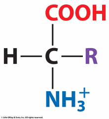 What is the pH of this amino acid?