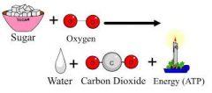 Formlen for respiration er: C6H12O6  + 6O2 --> 6CO2 + 6 H2O + Energi