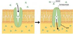 Sukker kommer ind i cellerne via. aktiv transport.