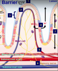 What are the layers of the gastric mucosal barrier?