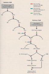 פקטורים תלויים בויטמין K 2,7,9,10 protein c צריך לזכור שהוא עולה ראשון ולכן תחילה תהיה יותר קרישה  המע' האינטרניזית תלויה ב TF לעומת האינטרנזית...