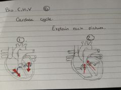 Explain each stage of 1 and 2 of the cardiac cycle