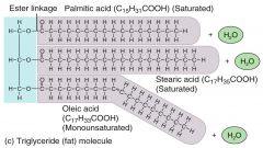 lipids made up of a glycerol and 3 fatty acids; provide protection, insulation, and energy