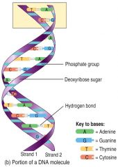 Contain C, H, O (sugars), N-bases and a phosphate group